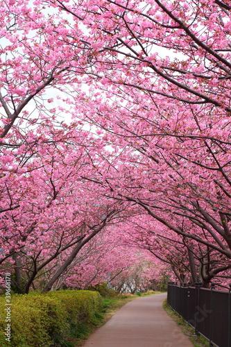 Fototapety przestrzenne   sakura-arch