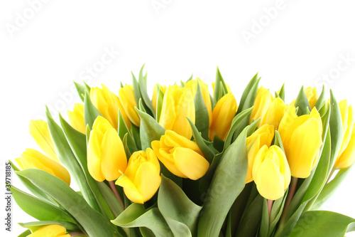 bukiet-tulipanow-na-bialym-tle