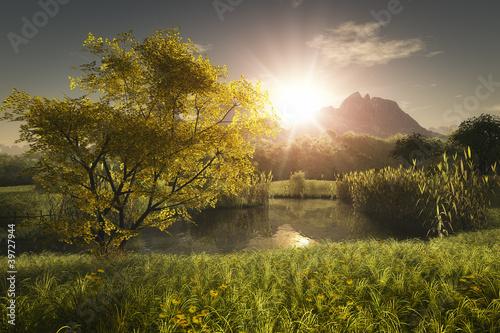 Fotografie, Tablou  maple tree