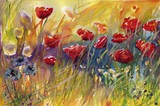 Fototapeta Kwiaty - piękne maki na łące