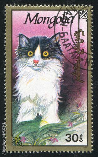 Poster Croquis dessinés à la main des animaux cat
