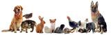 Fototapeta Animals - groupe d'animaux domestiques