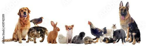 Fototapeta groupe d'animaux domestiques obraz