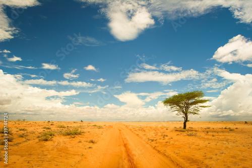 Valokuva Lonely tree in the desert