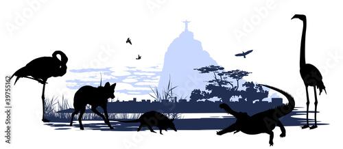dzikie-zwierzeta-i-ptaki-w-brazylii