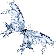 Water Splash Butterfly 2