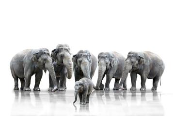 Obraz na Szkle Słoń Elefantenherde