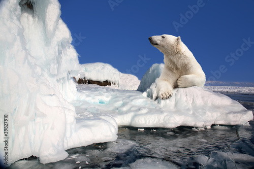 Tuinposter Ijsbeer polar bear standing on the ice block