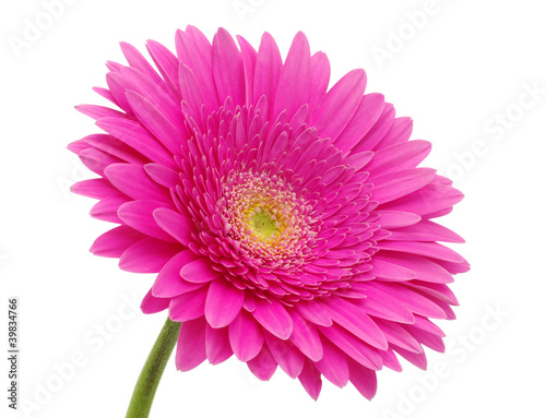 Door stickers Gerbera gerbera flower
