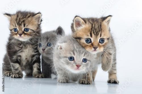 group of little kittens - 39848362