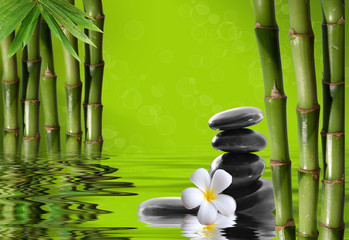 Obraz na SzkleYoung, green bamboo in the background boke