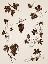 Grape Vine Design Elements