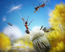 Ants Flying With Umbrellas - S...
