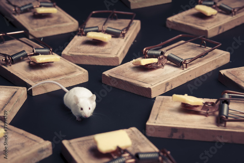 Valokuva  multiple mouse traps with cheese on a dark background