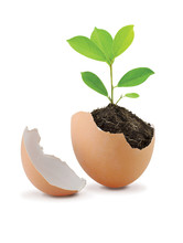 Young Green Plant With Soil In Eggshell Isolated On White Backgr