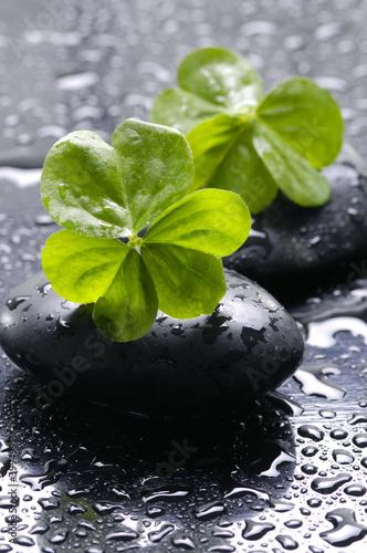 spa-martwa-natura-z-czarnymi-kamieniami-i-lisci-z-woda
