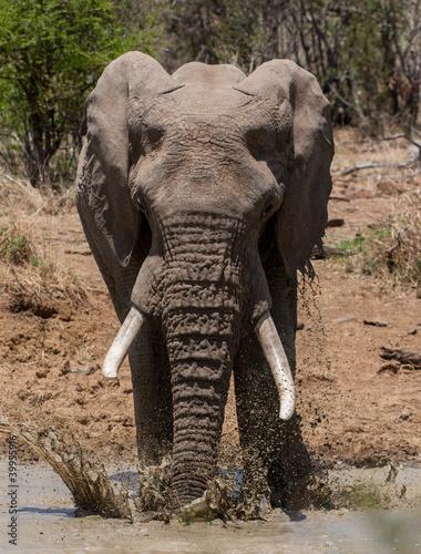 Garden Poster Elephant Splash
