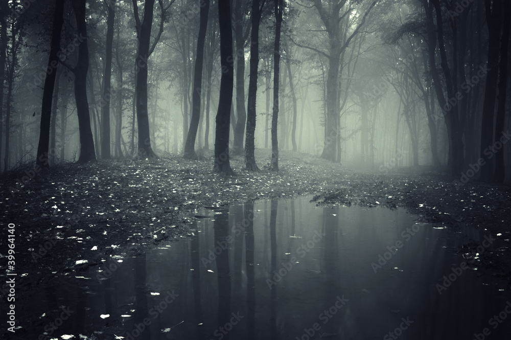 Fototapety, obrazy: pond in a forest with fog