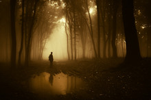 Man In A Forest Reflecting In ...