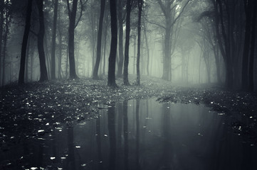pond in a forest with fog