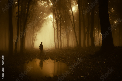 Fototapeten Wald man in a forest reflecting in a pond after rain