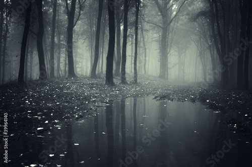 In de dag Bleke violet pond in a forest with fog