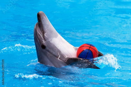 Poster Dolfijnen Dolphin playing with ball in blue water