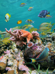 A shoal of colorful tropical fish with a starfish, sponges and marine worms underwater  in a coral reef of the Caribbean sea