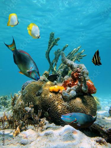 powierzchnia-wody-i-zycie-morskie