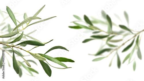 Tuinposter Olijfboom olive tree branches