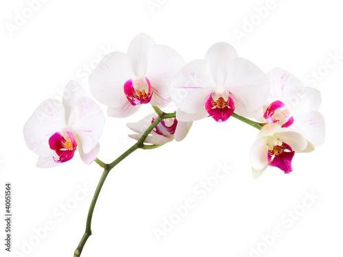 Cadres-photo bureau Orchidée orchid