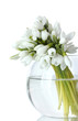 beautiful bouquet of snowdrops in transparent vase isolated