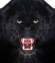 Fototapeta Black Leopard