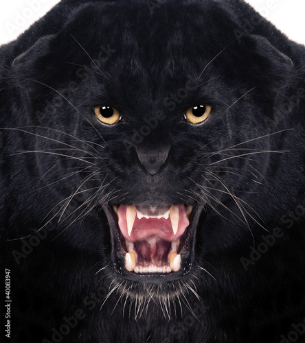 Deurstickers Panter Black Leopard