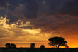 African sunset with silhouetted trees