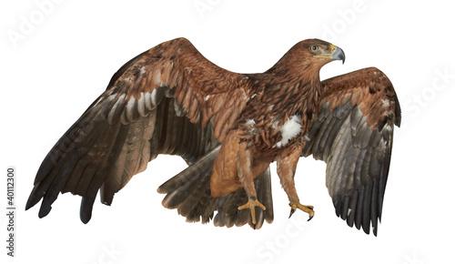 Garden Poster Eagle Eagle