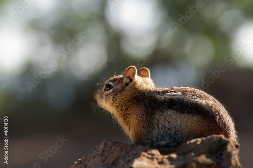 In de dag Zwavel geel Squirrel at Grand Canyon North Rim