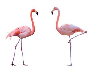 Par flamingo