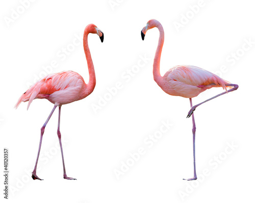 Fotobehang Flamingo Couple de flamant rose