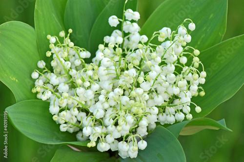 Poster Muguet de mai Lily of the valley (convallaria majalis) bouquet