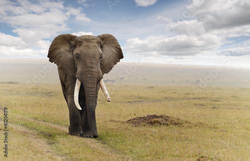 Foto op Aluminium Olifant Elephant