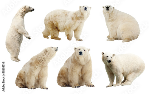 Spoed Foto op Canvas Ijsbeer Set of polar bears. Isolated over white