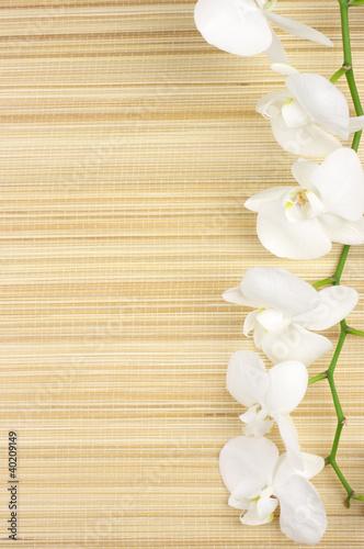 orchidea-na-macie