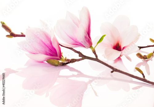 Pink spring flowers with reflection - 40229660
