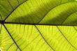 textura folha