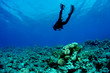 canvas print picture Scuba Diver and Coral Reef