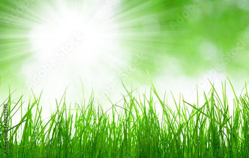 Foto op Canvas UFO Fresh spring grass