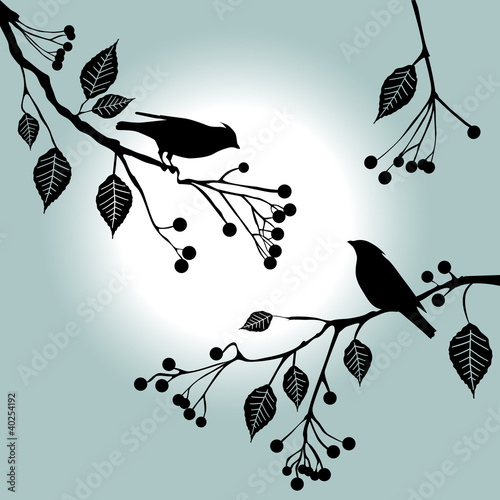 Birds on the branch. Summer days. Poster