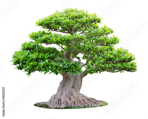 Deurstickers Bonsai Big bonsai tree isolated on white background