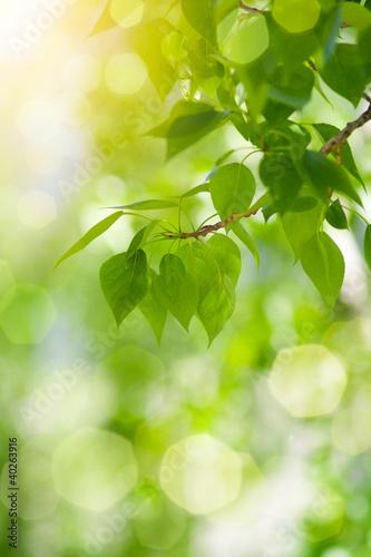 galaz-zielonych-lisci